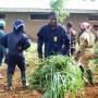 Apoyo a Centros Escolares Granja Escuela de Menteh 1 Camerún