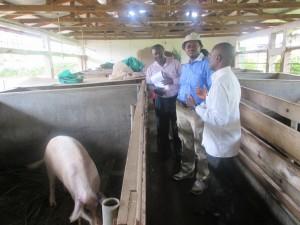le Représentant FIDA visite l'unité porc