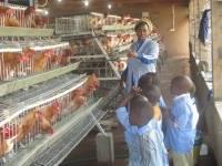 Enfants de l'Ecole de Menteh visitant l'unité des Pondeuses au Nazareth Centre